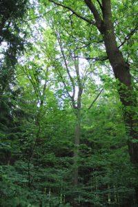 IMG 1415 200x300 - Mondphasenholz aus eigenem Wald