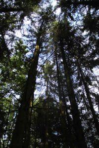 IMG 1421 200x300 - Mondphasenholz aus eigenem Wald