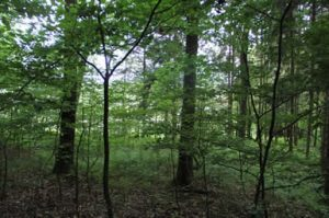IMG 1422 300x199 - Mondphasenholz aus eigenem Wald