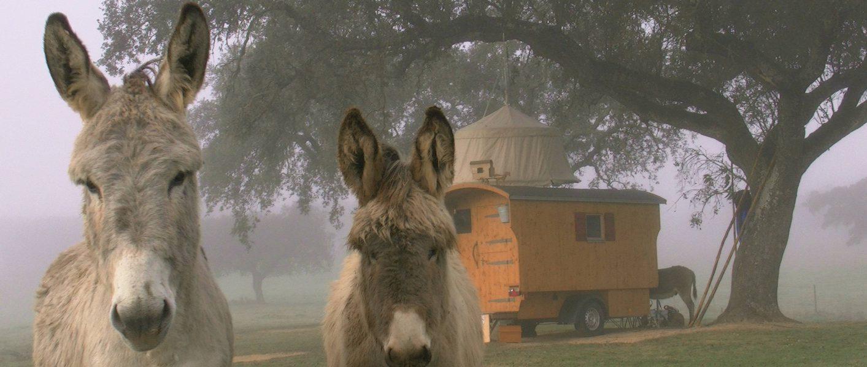 donkeys5